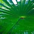 A Palm  by gillyisme53