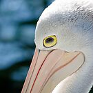 Pelican by gillyisme53