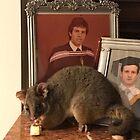 Possum on the loose by Richard Shakenovsky