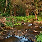 Stream near Broadboyne Bridge Co.Meath by Martina Fagan