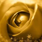 Gorgeous Soft Golden Rose With Snow by hurmerinta