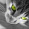 Cats with Selective Color