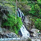 Newell Falls - Waterfall Way between Dorrigo and Bellingen, NSW, Australia` by Joe Hupp