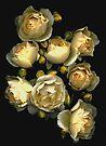 Graham Thomas Roses by Barbara Wyeth