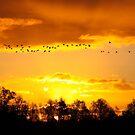 A Flock of Geese in A Golden Sky by Jo Nijenhuis