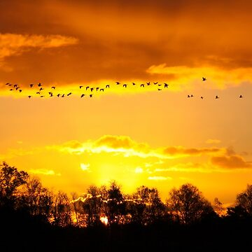 A Flock of Geese in A Golden Sky by Jokus