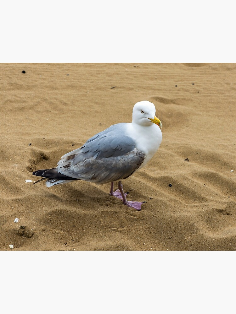 Seagull on a sandy beach by tdphotogifts