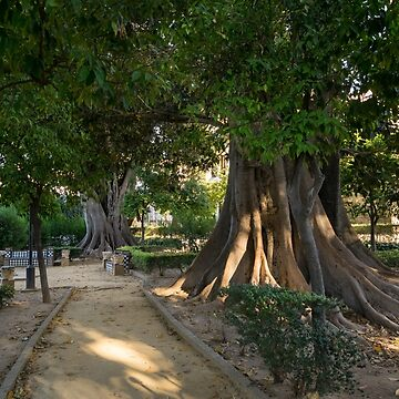 Hiding from the Heat in Seville Spain - Jardines de Murillo Giant Ficus Trees by GeorgiaM