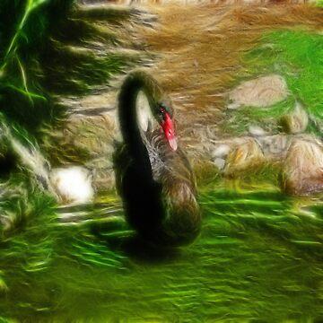 Black Swan by LuciaS
