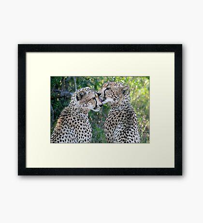 Cheetah Brothers Framed Print