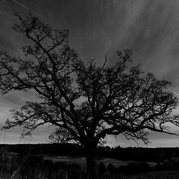 Old Tree by purpleelephant