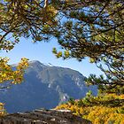 View of the snowy summit of Mount Olympus in the frame of the branches of trees with autumn foliage. Litochoro. Greece by Emma Grimberg