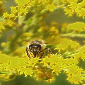 Little bee by LuciaS