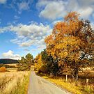 Autumn Splendor Yellow Take the Slow Road in Scotland by John Kelly Photography (UK)