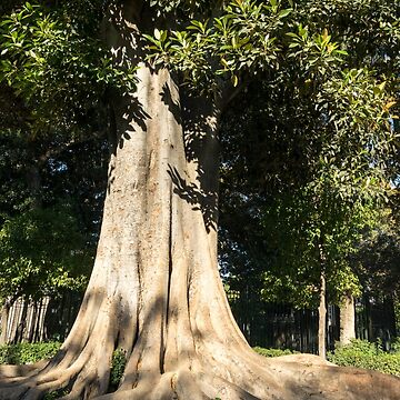 Pure Power - a Giant Ficus Tree in Jardines de Murillo  by GeorgiaM
