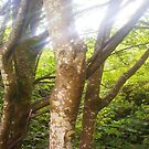 Sun Rays & Tree Bark by LADeville