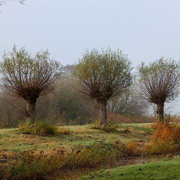 Autumn Scenes III by cuprum