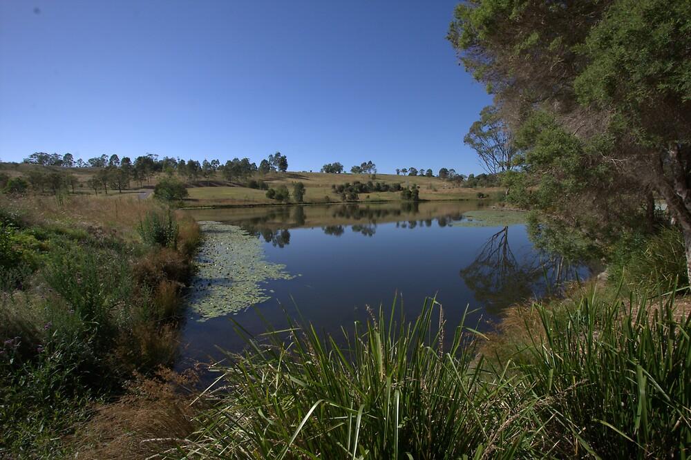Mount Annan Botanic Garden by Jay Spadaro