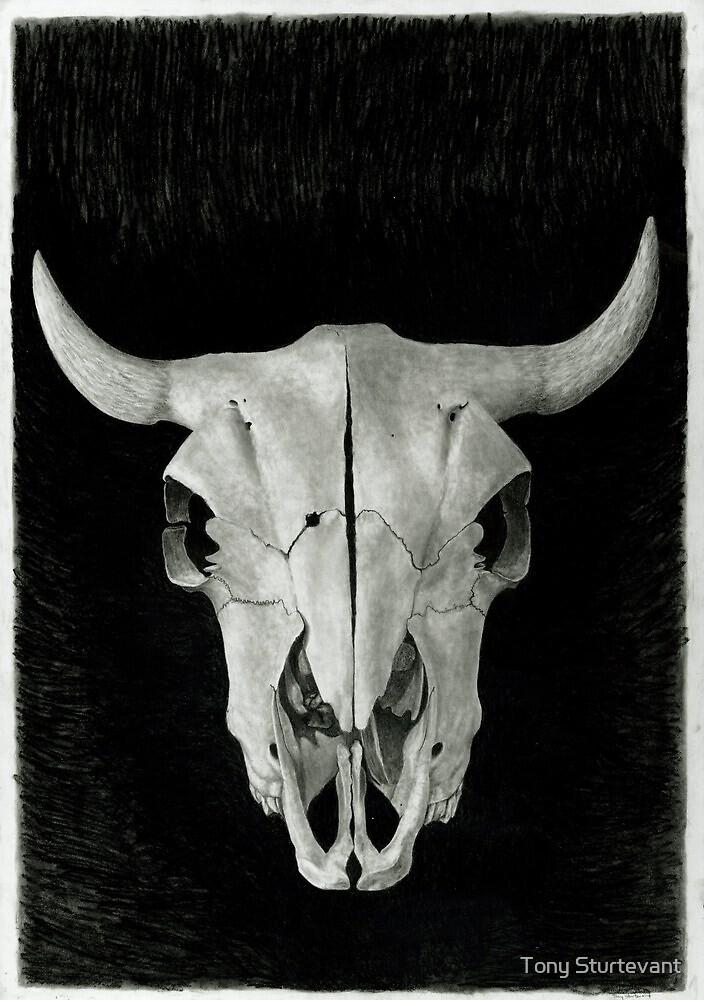 Buffalo Skull by Tony Sturtevant