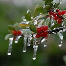 Berries in Ice by Colleen Drew