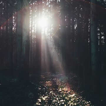 Sun light through the woods by franceslewis