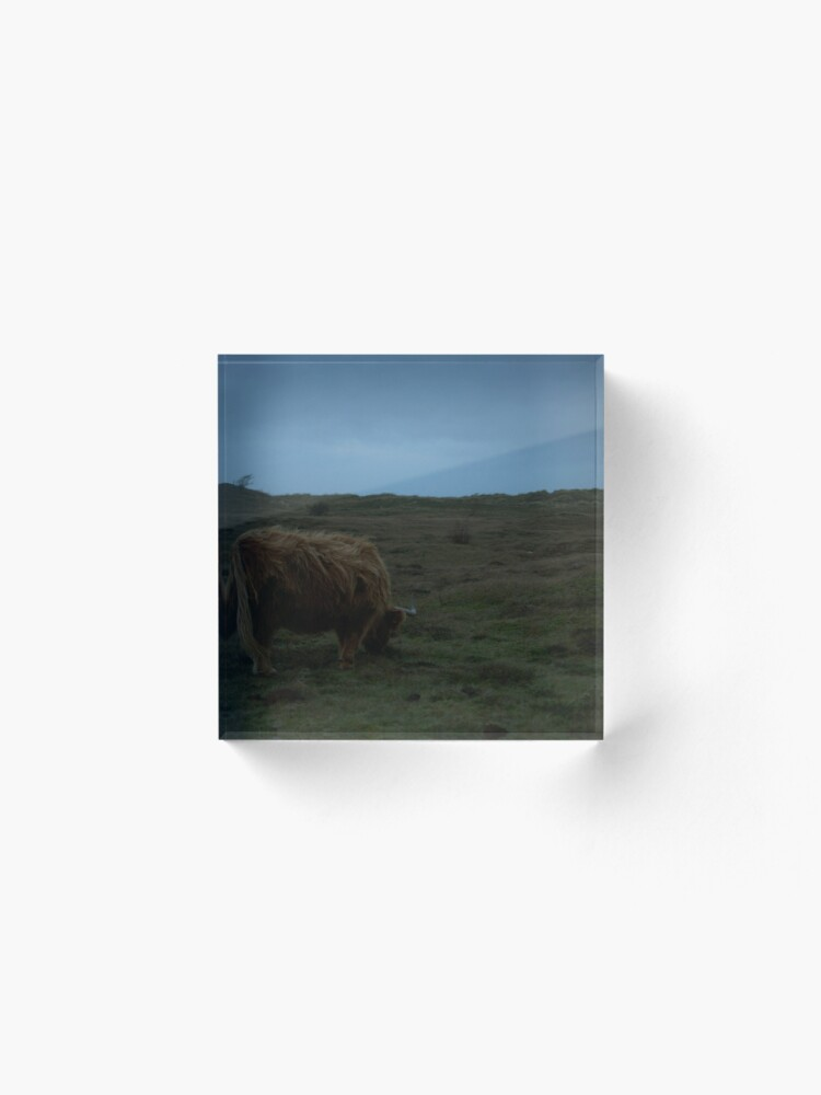 Alternate view of Highland-Cattle likes the storm Acrylic Block