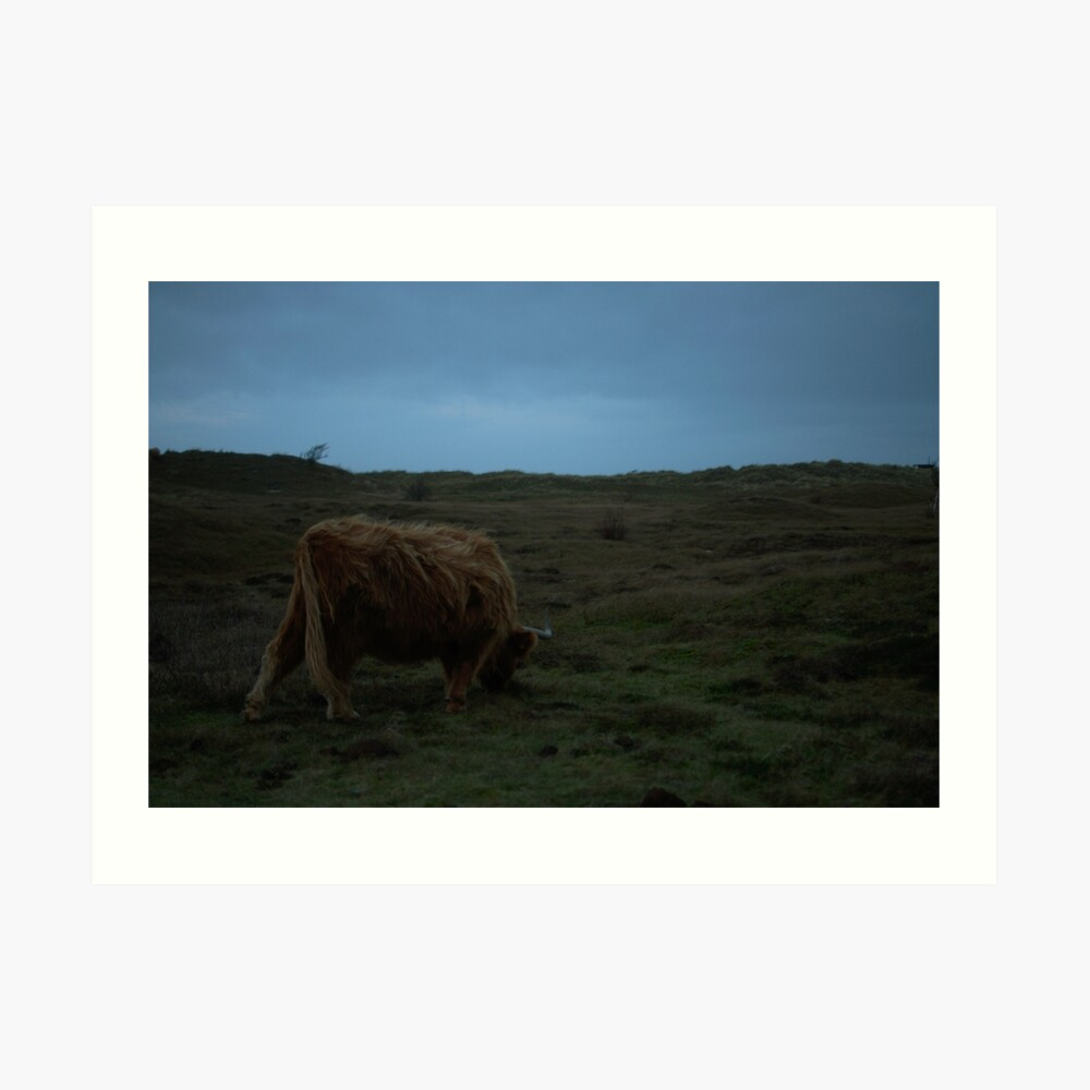 Highland-Cattle likes the storm Art Print