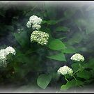 Flowers and Fog by N8istry