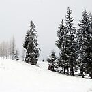 Wave of Snow and Trees by Andrea Kabai