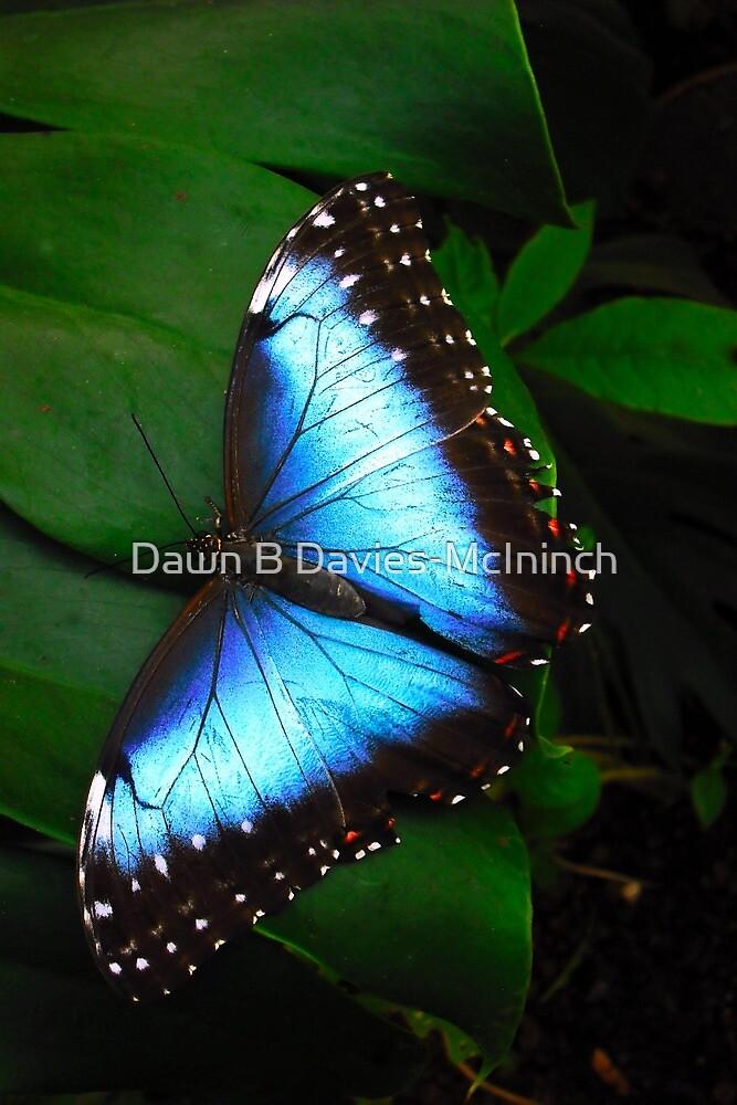 Azure Dream by Dawn B Davies-McIninch
