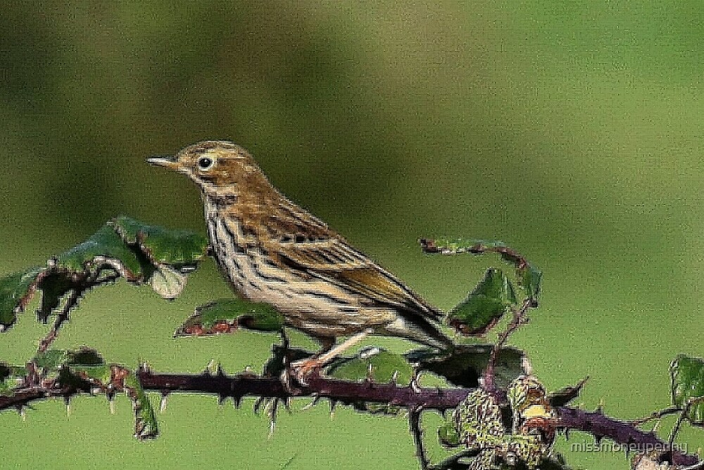 Meadow Pipit by missmoneypenny