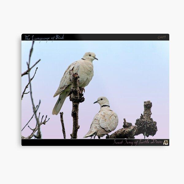 Sweet Song of Turtle Doves Metal Print