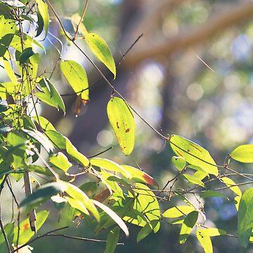 Smilax australis - Native Sarsparilla vine by Bellamaree