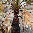 Burned Palm Stump by joshsteich