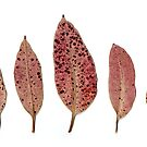 pink gum leaves, a scanogram by Janine Paris