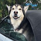 Sports car Dog! by Roz McQuillan
