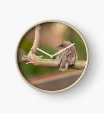 Juvenile Red Wattlebird Clock