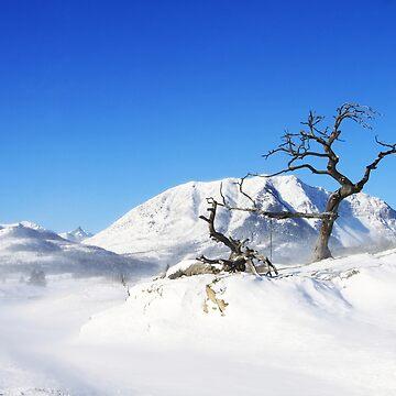 Winter in Burmis by alycetaylor