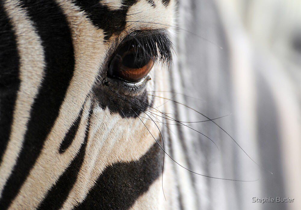 Lashes.. by Stephie Butler