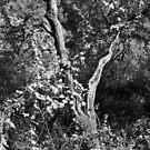 Los Angeles Forest, Near Infrared by joshsteich