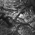 Los Angeles Forest, Near Infrared II by joshsteich