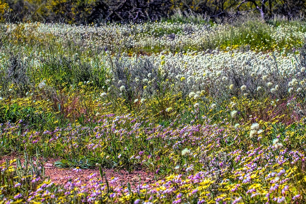 A Carpet of Wildflowers by Elaine Teague