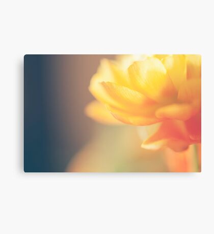 Chinese Rose Canvas Print