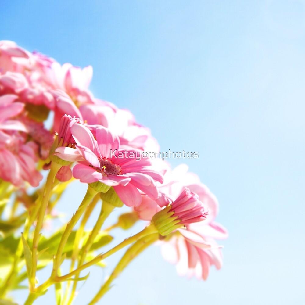 Pink Tan by Katayoonphotos