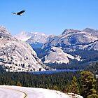 Yosemite Park Tenaya See von Thomas Burtney