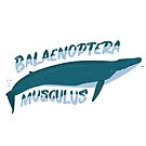 Balaenoptera Musculus Blue Whale Largest animal in the world Gift Whale Giant Huge mammal's favorite animal by ArtOfCopenhagen