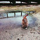 Okunoshima Rabbit 2 - Okunoshima, Japan by IkuTree