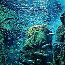 Osaka Aquarium - Osaka, Japan by IkuTree