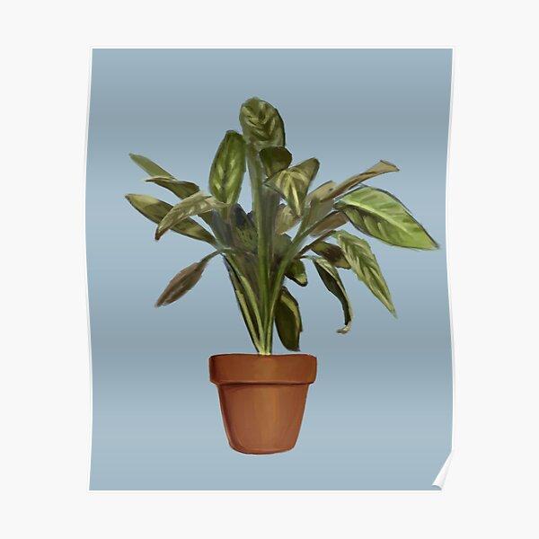 Ficus Poster