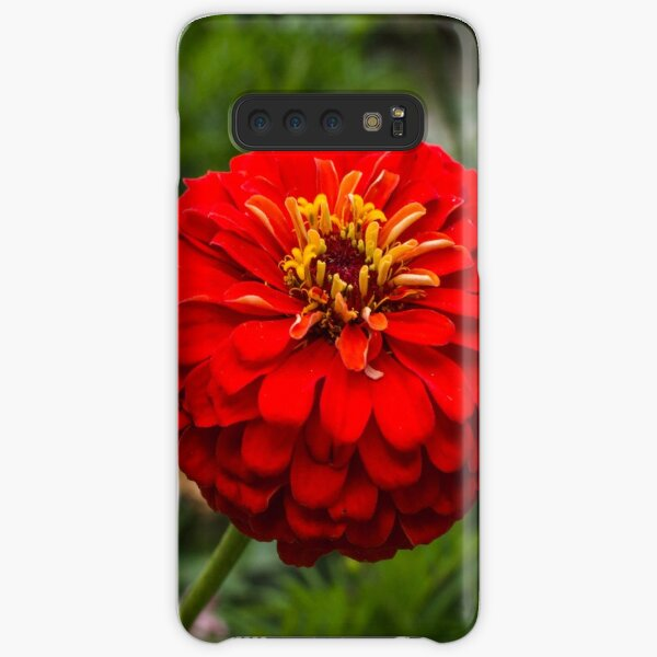 Zinnia flower Samsung Galaxy Snap Case